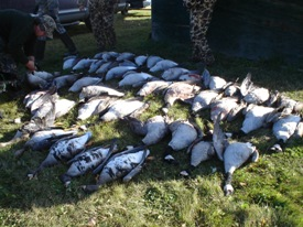 saskatchewan goose hunting with goose guides and waterfowl outfitters