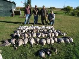 Saskatchewan goose hunting, Saskatchewan goose hunting outfitters and Saskatchewan goose guides