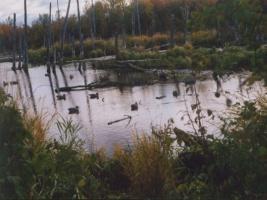 Canada duck hunting, canada duck guides, Saskatchewan duck hunting