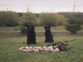 Canada duck dogs, duck hunting guides on Canada duck hunts